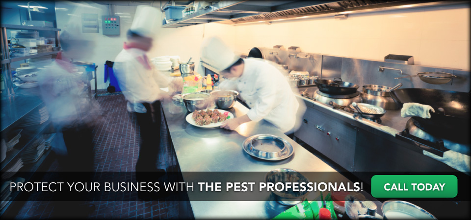 Protect Your Business with The Pest Professionals! Call Today | Workers in kitchen