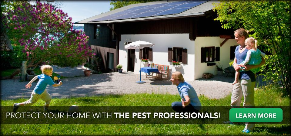 Protect you home with the pest professionals! Learn More | Family playing in yard
